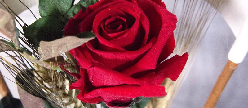 Este Sant Jordi regala rosas preservadas