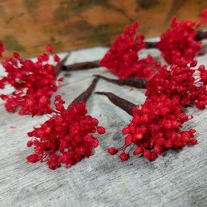 Paniculata Roja para el Pelo
